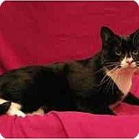 Adopt A Pet :: William - Sacramento, CA