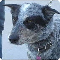 Adopt A Pet :: Diego - ADOPTION PENDING - Phoenix, AZ