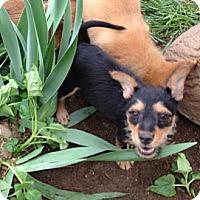 Adopt A Pet :: Bert - Fowler, CA