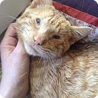 Adopt A Pet :: Jackpot - St. Louis, MO