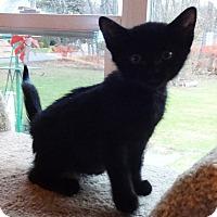 Adopt A Pet :: Sarah - N. Billerica, MA
