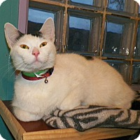 Adopt A Pet :: Treavor - Dover, OH