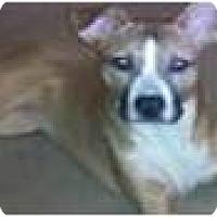 Adopt A Pet :: Blaze - Courtesy Listing - Cleveland, OH