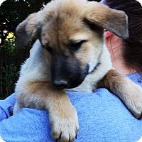 Adopt A Pet :: Dublin - Pewaukee, WI