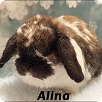 Adopt A Pet :: Alina - Auburn, CA