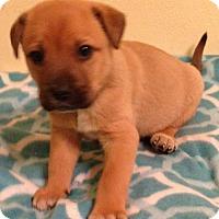 Adopt A Pet :: Rosie - Louisville, KY