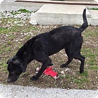Adopt A Pet :: Tillman - Lewisburg, TN