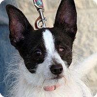 Adopt A Pet :: Flynn - Palmdale, CA