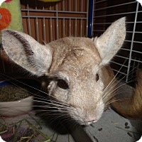Adopt A Pet :: Moose - Titusville, FL