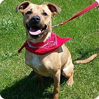 Adopt A Pet :: Ziggy - Lisbon, OH