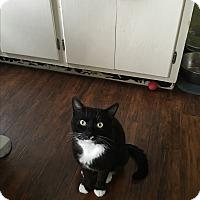 Adopt A Pet :: Leonard (Lenny) - North Haven, CT