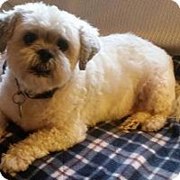 Adopt A Pet :: Dusty - Potomac, MD