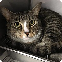 Adopt A Pet :: Doc - Voorhees, NJ