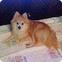 Adopt A Pet :: Kameo - conroe, TX