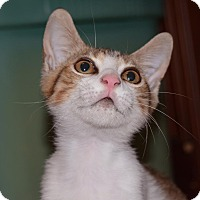 Adopt A Pet :: Malcom - Homestead, FL