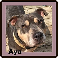 Pit Bull Terrier Mix Dog for adoption in Memphis, Tennessee - Aya