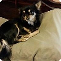 Adopt A Pet :: Punky - Mesa, AZ