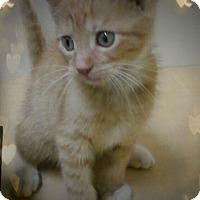 Adopt A Pet :: Finn - Trevose, PA