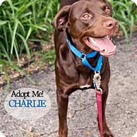 Adopt A Pet :: Charlie - West Des Moines, IA