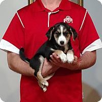 Adopt A Pet :: Blossom - South Euclid, OH