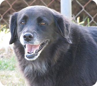 Border Collie Mix Dog for adoption in Fairmont, West Virginia - Oreo