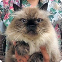 Adopt A Pet :: Clyde - Wildomar, CA