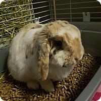 Adopt A Pet :: Ari - Winnipeg, MB