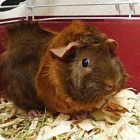 Adopt A Pet :: DAISY - Fort Wayne, IN