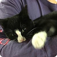 Adopt A Pet :: Cupcake - Butner, NC