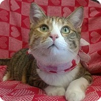 Adopt A Pet :: Jazzy and Jet - Waldorf, MD