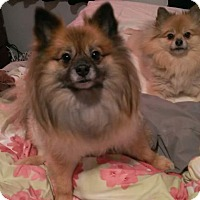 Adopt A Pet :: Marley and Nani - Gig Harbor, WA