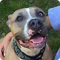 Adopt A Pet :: Leyla - THREE RIVERS, MA