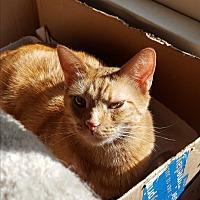 Adopt A Pet :: Rusty - Monrovia, CA