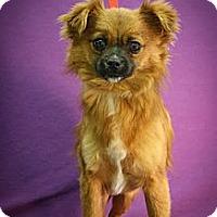 Adopt A Pet :: Sandy Beach - Broomfield, CO