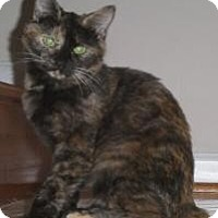 Adopt A Pet :: Clara - Reston, VA