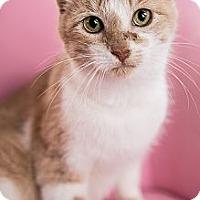 Adopt A Pet :: Tiana - Eagan, MN