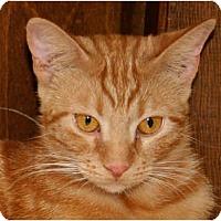 Adopt A Pet :: Darla - Bonita Springs, FL