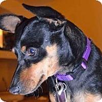 Adopt A Pet :: Ulrich - Phoenix, AZ