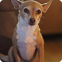 Adopt A Pet :: Dee Dee - Sacramento, CA