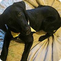 Adopt A Pet :: Lucinda...in RI! - Foster, RI