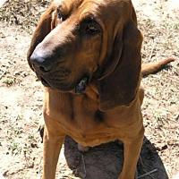 Adopt A Pet :: Lu ( Little 'Un) - Allentown, PA
