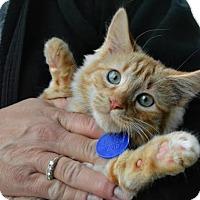 Adopt A Pet :: Bobby - Temecula, CA