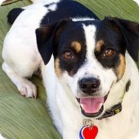 Adopt A Pet :: Mikey - Bellflower, CA