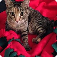 Adopt A Pet :: Mobley - St. Louis, MO