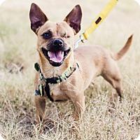 Adopt A Pet :: Alastor - Austin, TX