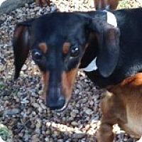Adopt A Pet :: Frannie Franciscan - Houston, TX