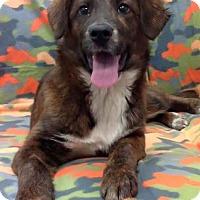 Adopt A Pet :: Sadie - Huntsville, AL