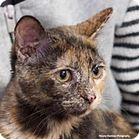 Adopt A Pet :: Daisy B - Marietta, GA