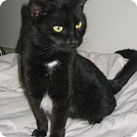 Adopt A Pet :: Ouija - Bloomsburg, PA