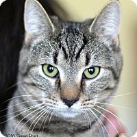 Adopt A Pet :: Autumn - Bedford, VA